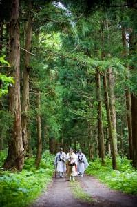 杉木立を歩く